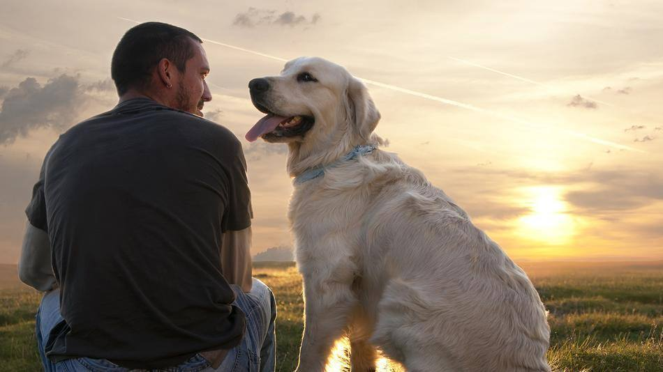 Crema News - Coronavirus, passeggiate con il cane