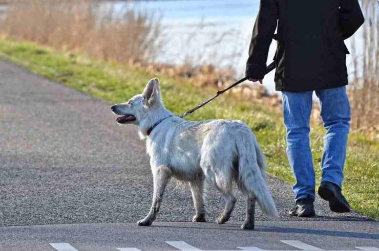 Crema News - A passeggio in zona gialla