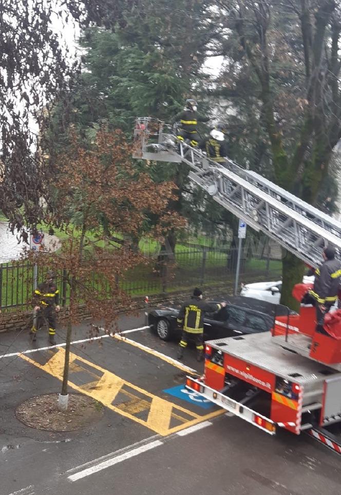 Crema News - Gatto sull'albero, arrivano i pompieri