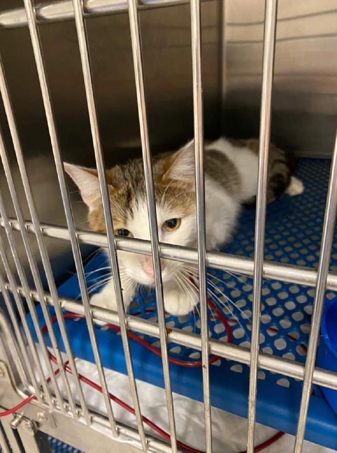 Crema News - Questo gatto ha bisogno di noi