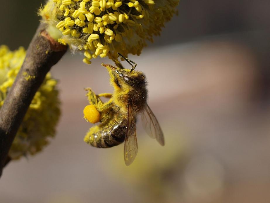 Crema News - Moria delle api, la risposta