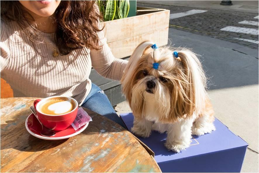 Crema News - A spasso col cane (e ti pagano)
