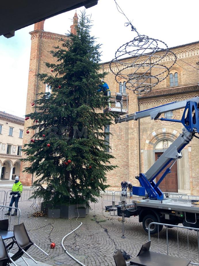 Crema News - Addio all'albero