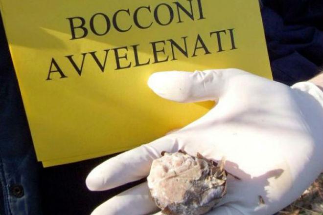 Crema News - Bocconi avvelenati