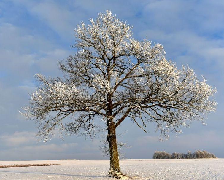 Crema News - Giornata di sole ma fredda
