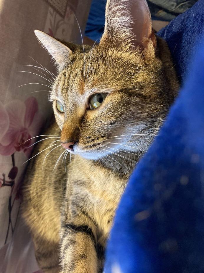 Crema News - Giornata del gatto