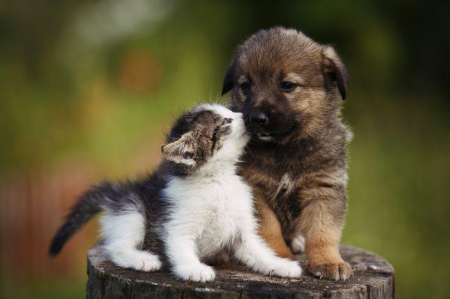 Crema News - Stop ai maltrattamenti degli animali