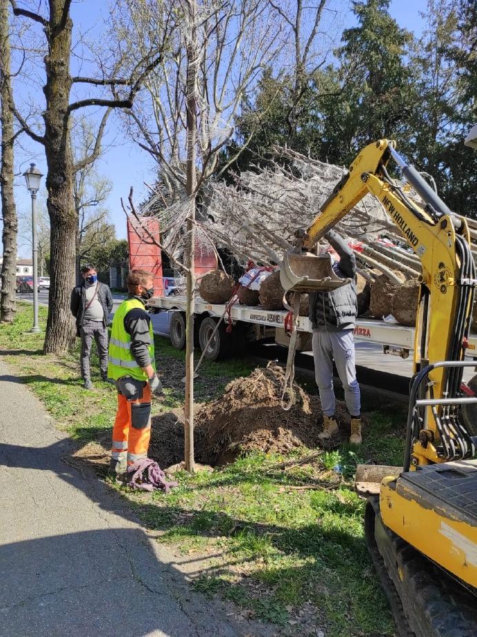 Crema News - Nuovi alberi