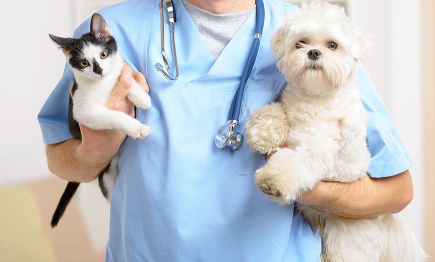 Crema News - Visite veterinarie gratuite