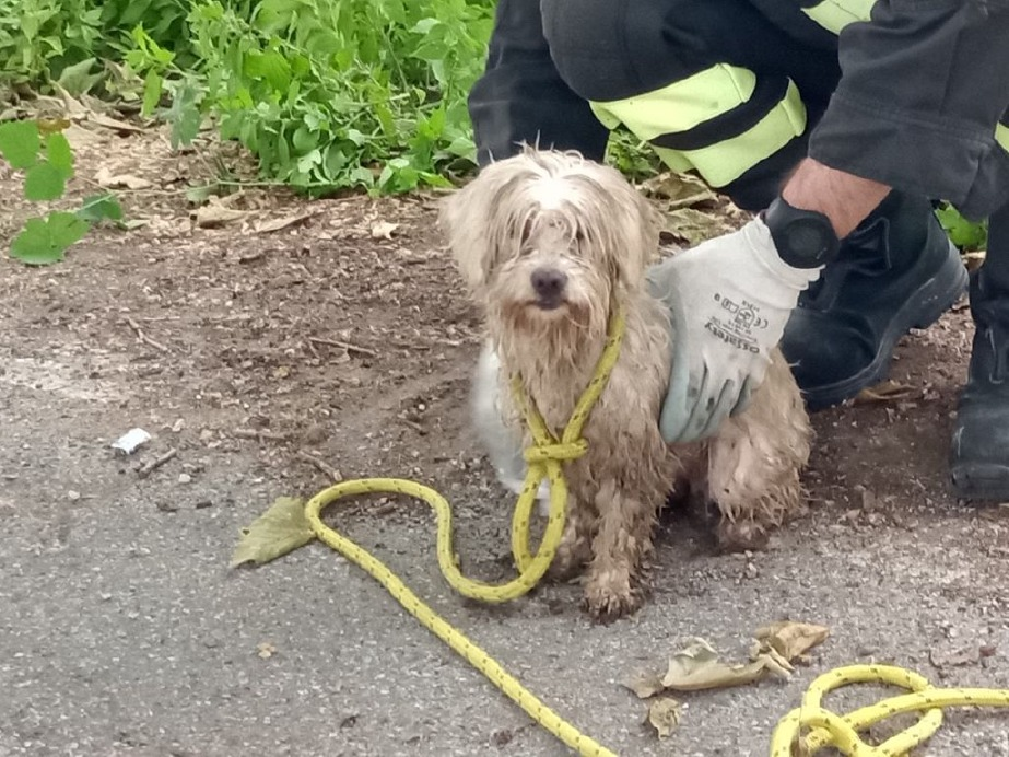 Crema News - Pompieri salvano anatra e cagnolino