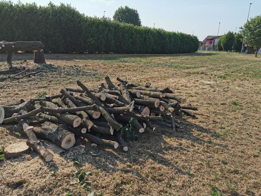 Crema News - Via gli alberi per far posto ai pozzi