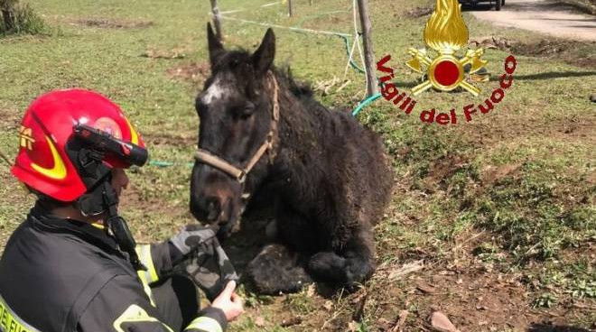 Crema News - Calesse e cavallo nel fosso