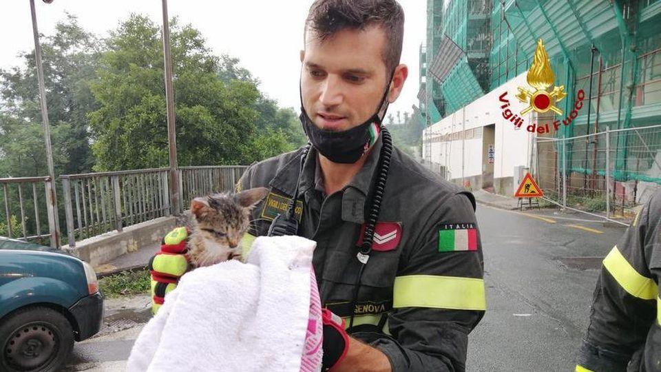 Crema News - Cane e gatto salvati dai vigili del fuoco
