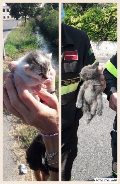 Crema News - Pompieri salvano due gatti