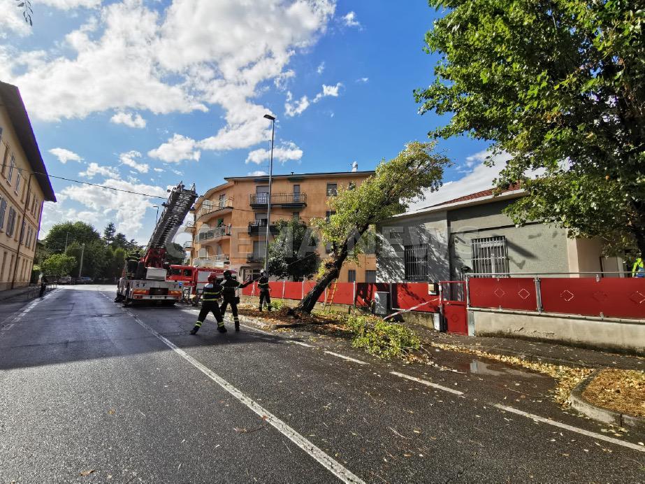 Crema News - Pianta caduta in via Carlo Urbino