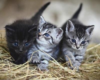 Crema News - Gattini cercano casa